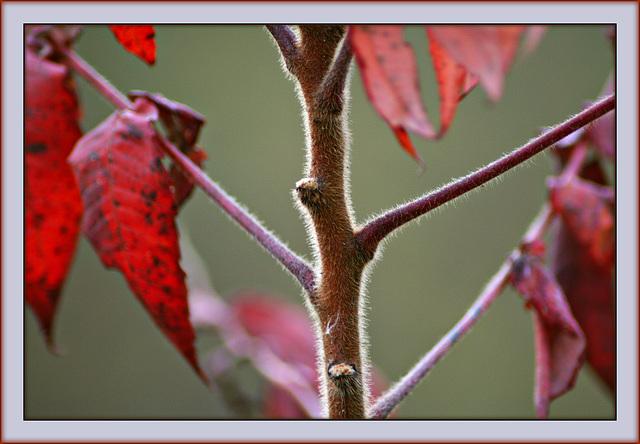 Autumn Fur