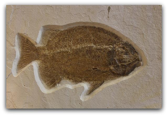 Fossile de Poisson