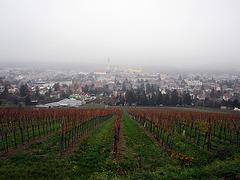 Blick auf Klosterneuburg N.Ö.