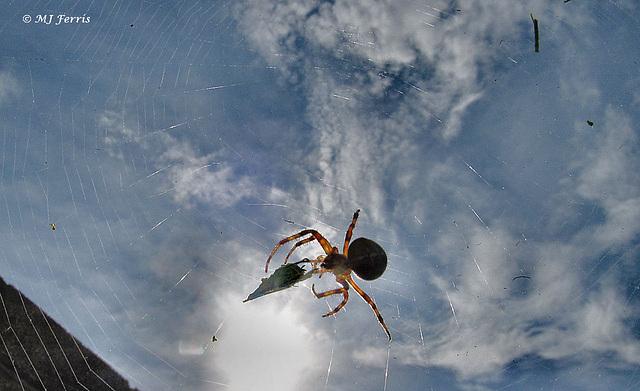 09 spider background