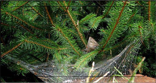 Webs 'n raindrops . . .