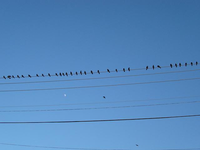 Die Vögel und der Mond