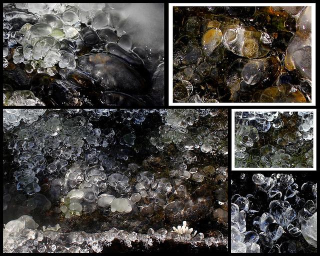 Coquillages et crustacés en gelée