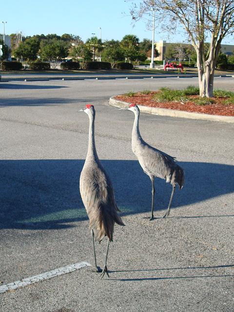Begegnung auf dem Parkplatz