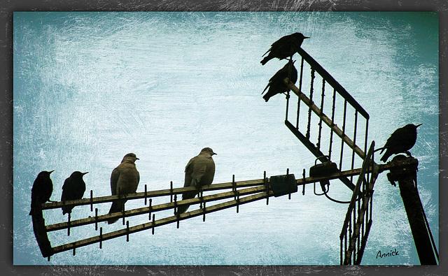 les oiseaux chantent hors antenne ♪ ♫