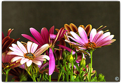 Just some flowers......