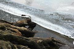 Wurzeln - Wasser - Eis