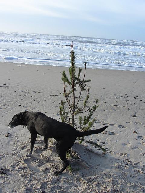 Baum zu Weihnachten