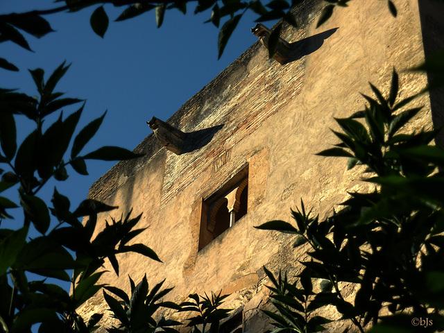Autour de l'Alhambra 5