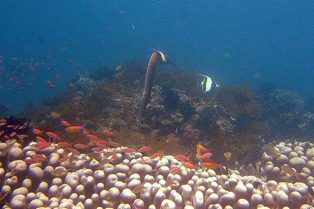 Fifteen meters underwater