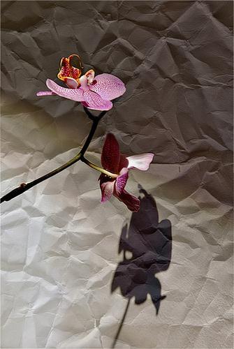 Orquídea sobre fondo de papel arrugado