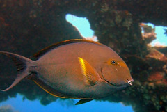 Mackerel fish in the wrack