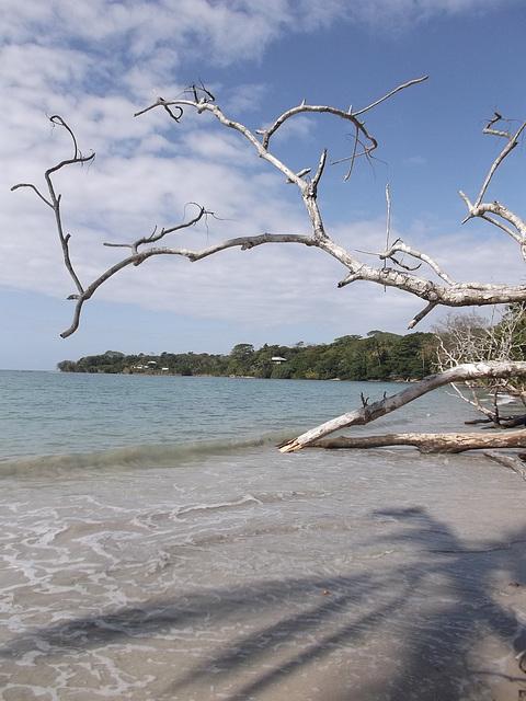 Caribbean ephemeral paradise /Paradis éphémère des Caraïbes.