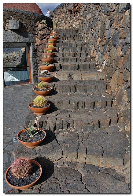 Kaktus | Treppe