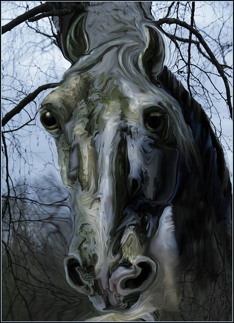 Bétula horse