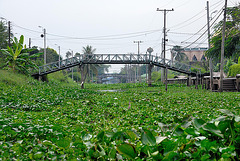 Khlong between Minburi and Lat Krabang