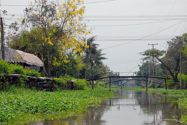 Idyllic atmosphere along the Khlong Bung Yai