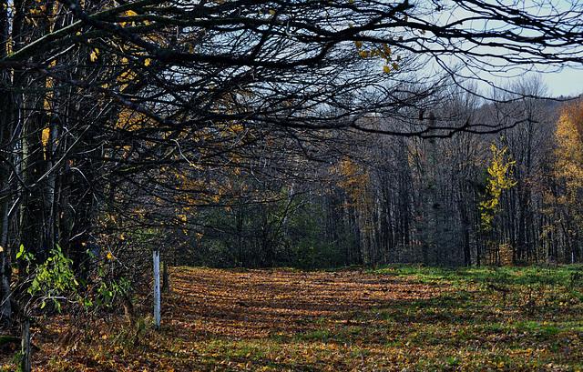 Charme d'automne.