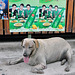Gorged dog in front of restaurant