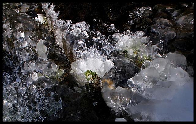 Floraisons de glace