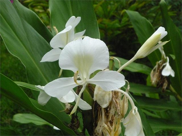 Flores blancas ticas 4