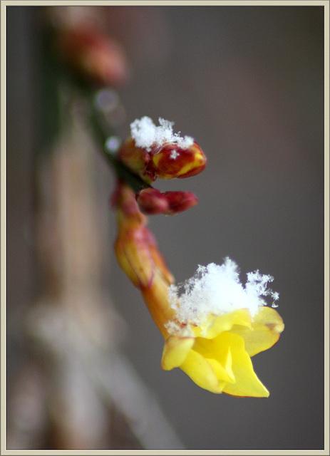 Kleine Frühlingsbotin