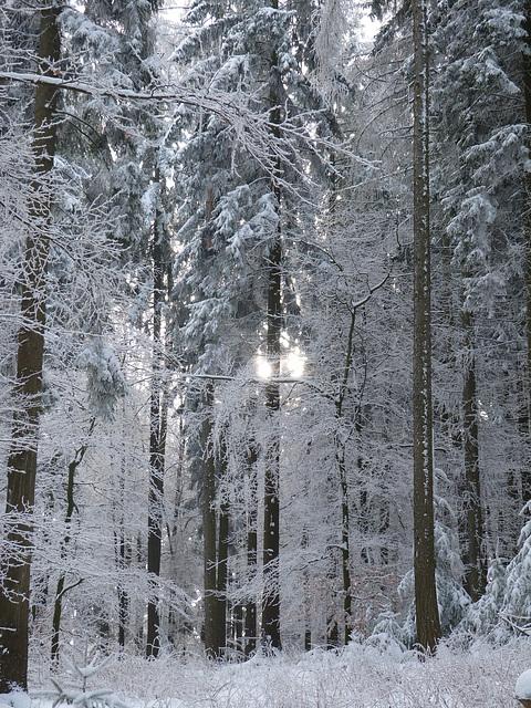 Verschneiter Mischwald