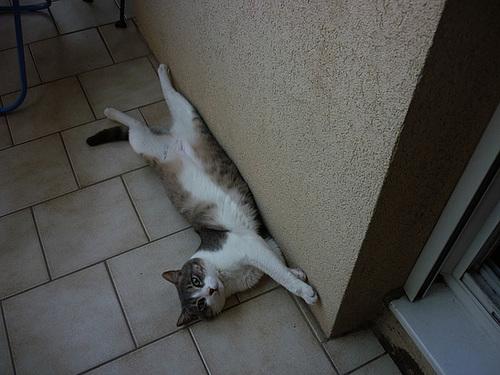 Chalut ...chat va vous ....moi c'est Choupy