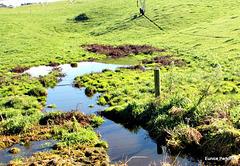 Rural stream.