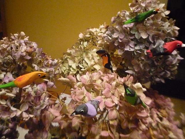 Birdoj de Brazilo