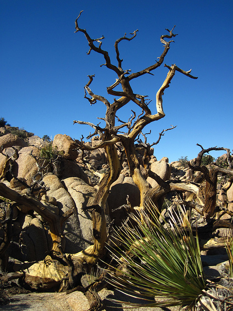 Hike To Eagle Cliff Mine (3942)