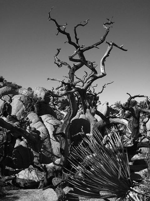 Hike To Eagle Cliff Mine (3942A)