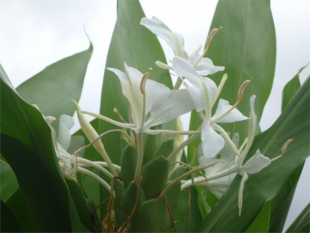 Flores blancas ticas 2