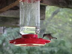Kolibri - 3