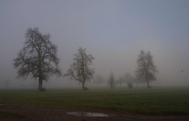 Nebel im Ried