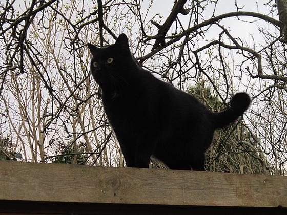 Pippin surveying me taking photos