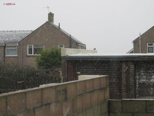 04 more snow