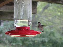 Kolibri - 4