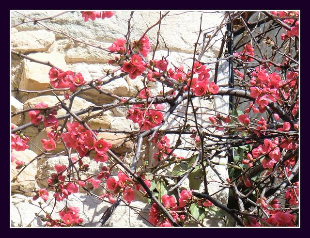 les rameaux fleuris