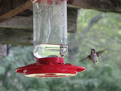 Kolibri - 5