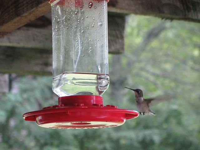 Kolibri - 6