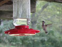 Kolibri - 7