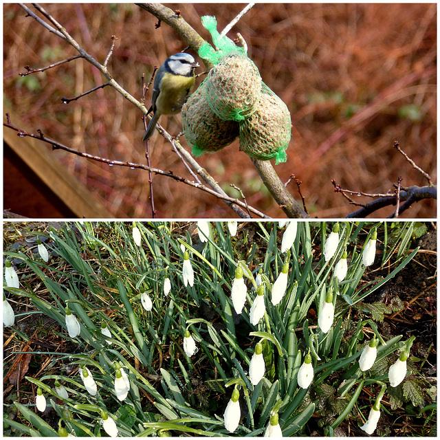 Der Frühling kommt bald - la printempo baldaŭ alvenos