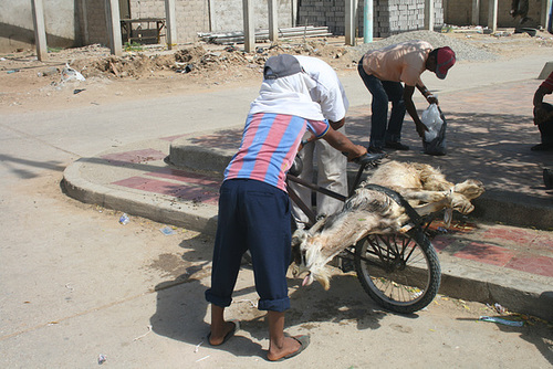 A Goat Transported by Bike