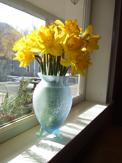 Daffs in the Sun