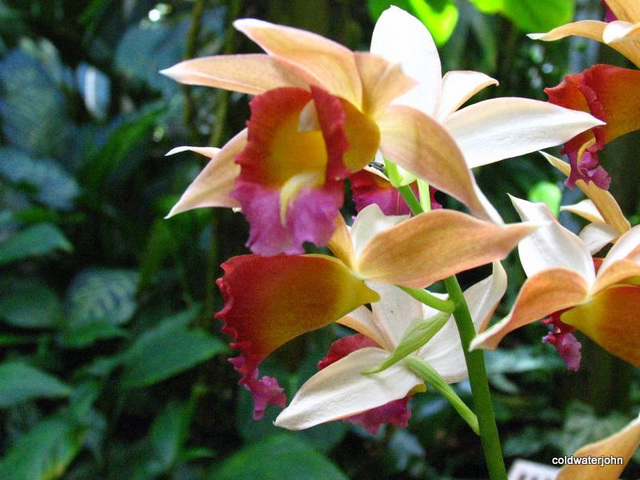 Sarasota Marie Selby Botanical Gardens 0ne of the finest in the USA with the world's largest living collection of orchids...