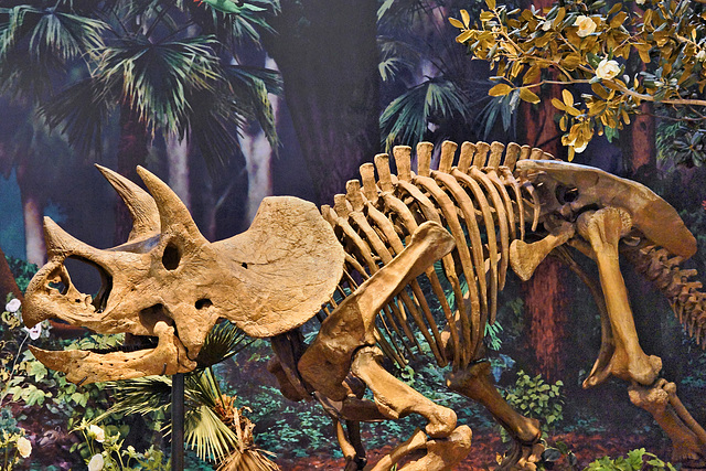 Triceratops – Carnegie Museum, Forbes Avenue, Pittsburgh, Pennsylvania