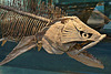 """Dinosaur"" Fish – Carnegie Museum, Forbes Avenue, Pittsburgh, Pennsylvania"