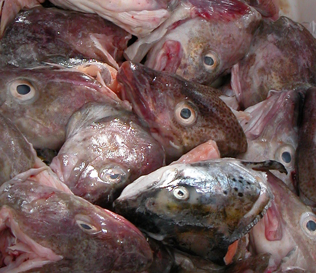 Fishes's heads on the Saturday market