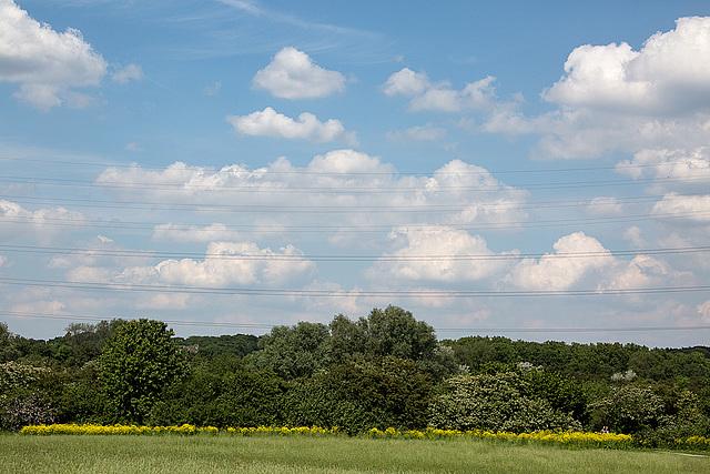 20140519 3374VRAw [D~OB] Ripsdorfer Wald